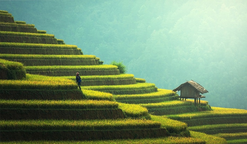 trekking tra le risaie in Asia